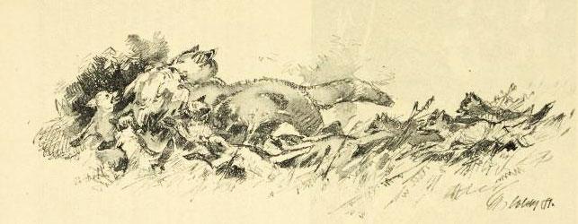 Famille de renards, dessin de Stanislav Lolek, 1919 © NY Public Library, digital collections
