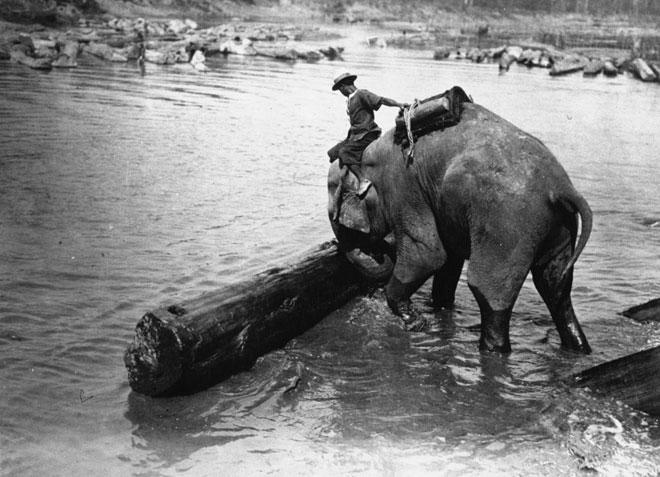 Éléphant au travail © Gallica-BnF