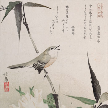 Roses et bambou avec rossignol, par Teisai Hokuba © H.O. Havemeyer Collection, Metropolitan Museum