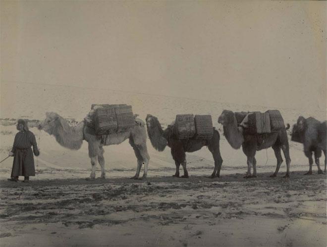 Caravane de thé dans la steppe mongole © Bibliothèque municipale de Dijon