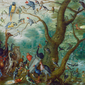 Jan van Kessel, Concert d'oiseaux, 1660-1670 © National Gallery of Art Washington