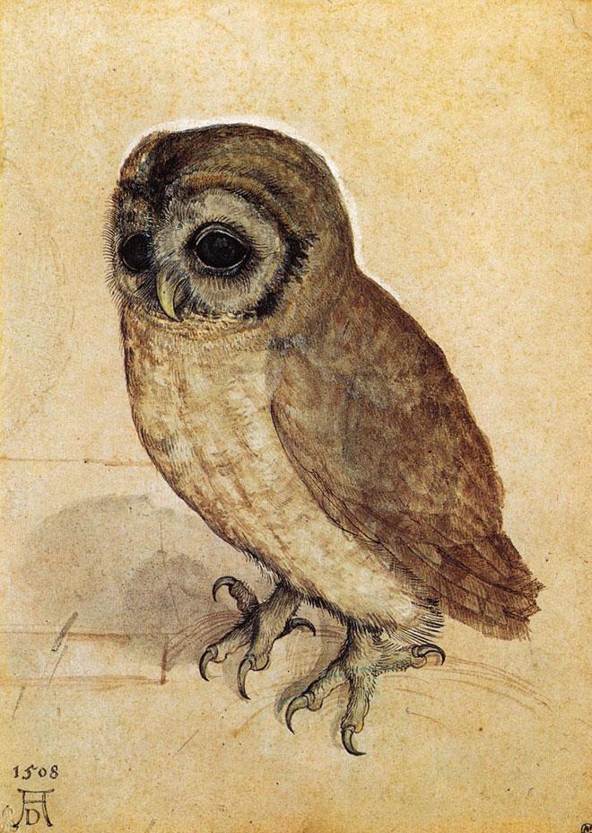 Albrecht Durer, Le petit hibou, 1506 © Albertina Vienne