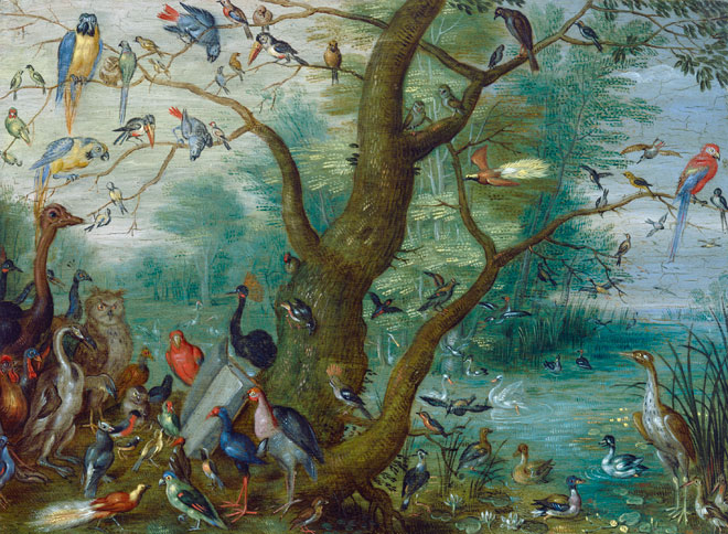 Concert d'oiseaux, par Jan van Kessel, 1660-1670 © National Gallery of Art Washington