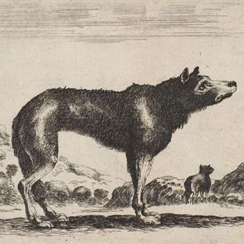 L'Œil du loup de Daniel Pennac |