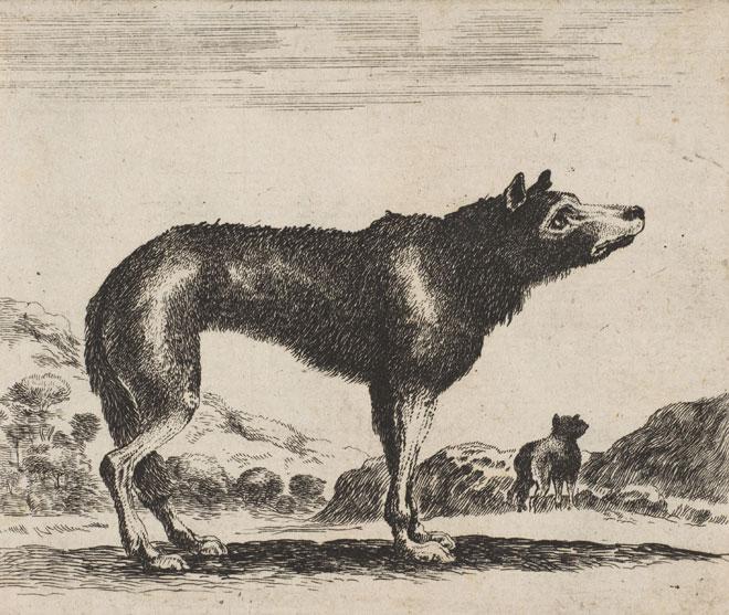 Loup, Anonyme d'après Stefano della Bella, 17e siècle © www.metmuseum.org