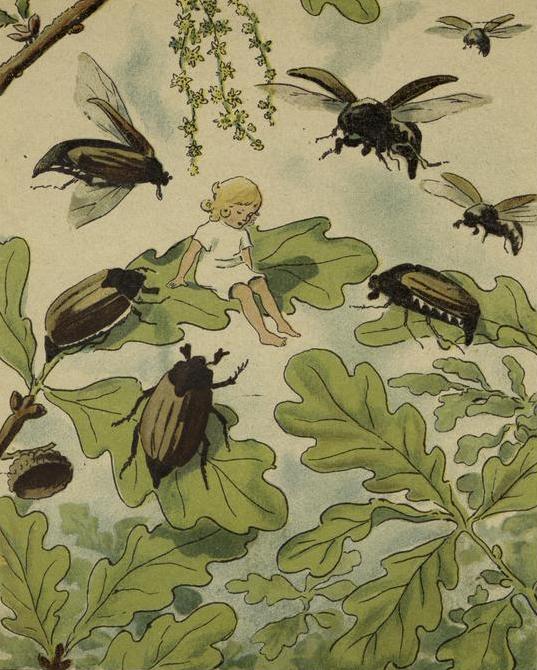 Illustration de Elsa Maartman Beskow pour le conte Poucette d'Andersen © NY Public Library, digital collection