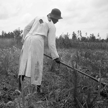 Culture à la binette dans le Sud, Mississippi, 1936. Photo: Dorothea Lange. Source: Library of Congress, FSA/OWI collection