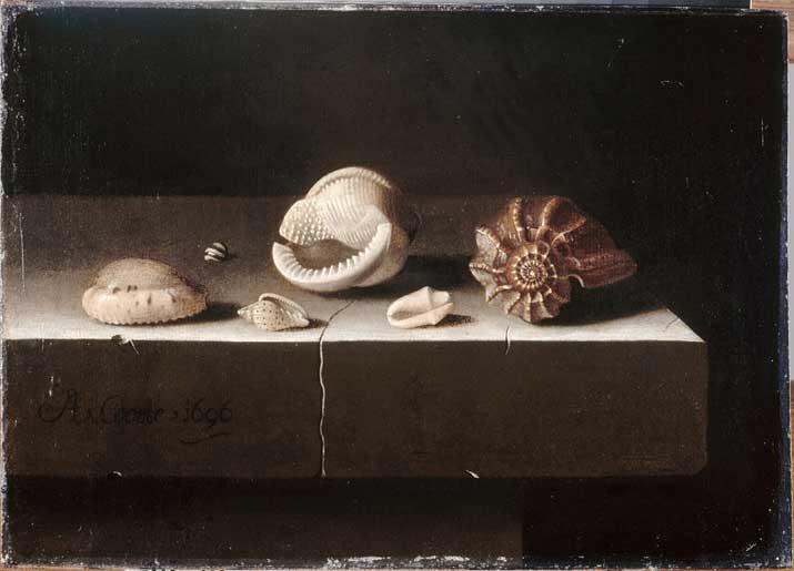 Six coquillages sur une tranche de pierre, Adrian Coorte © Musée du Louvre