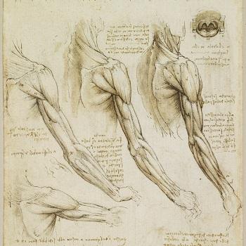 Muscles de l'épaule, du bras et du cou, dessin anatomique de Léonard de Vinci